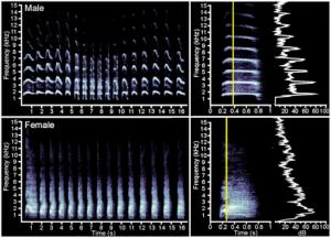kiwi bird calls spectrograms