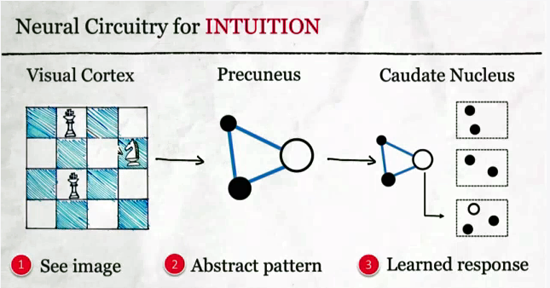 Intuition Sean Gourley