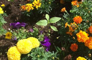 growing edge flowers